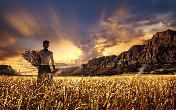 Resultado de imagem para colheita